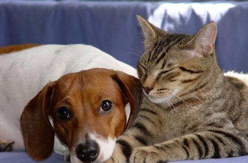 Article : Et moi, je préfère les chats…